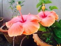 Blühende Blumen Stockbild