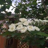 Blühende Blumen Stockfotos