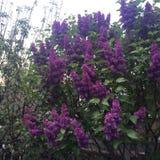 Blühende Blumen Lizenzfreie Stockfotografie