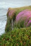 Blühende Blumen auf einer Klippe an der Kalifornien-Küste Stockfotos