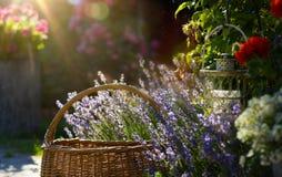 Blühende Blumen der Kunst in Provence stockfotografie
