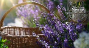 Blühende Blumen der Kunst in Provence lizenzfreies stockbild