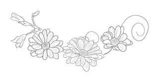 Blühende Blumen des Sommergartens vektor abbildung