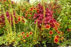 Blühende Blumen des Sommers in Arnhem Die Niederlande Juli lizenzfreie stockfotos