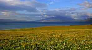 Blühende Blumen entlang dem alpinen See Lizenzfreie Stockfotografie