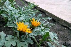 Blühende Blumen nähern sich Straße Lizenzfreie Stockfotografie