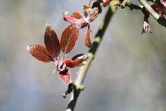 Blühende Braunblätter des einzelnen Baums. Lizenzfreie Stockbilder