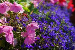 Blühende bunte Blüten Lizenzfreie Stockfotos