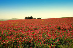 Blühende bunte Graslandlandschaft des Frühlinges Lizenzfreie Stockbilder