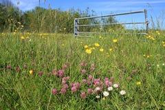Blühende Butterblumeen, Shamrocks und Gänseblümchen Lizenzfreie Stockbilder