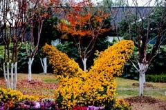 Blühende Chrysanthemen Stockfoto