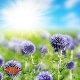 Blühende Disteln und Schmetterling Stockbilder