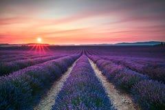 Blühende endlose Reihen der Felder der Lavendelblume auf Sonnenuntergang Valensol Stockbild