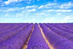 Blühende endlose Reihen der Felder der Lavendelblume. Valensole Provence stockfoto