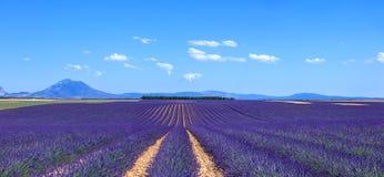 Blühende Feld- und Baumreihe der Lavendelblume. Valensole, nachgewiesen Stockbild
