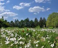 Blühende Felder Stockbild