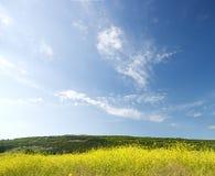 Blühende Felder in den Bergen Stockbilder