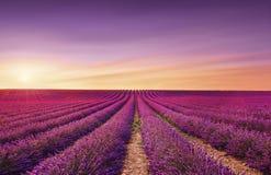 Blühende Felder der Lavendelblumen bei Sonnenuntergang Valensole, Provence, Frankreich stockfoto