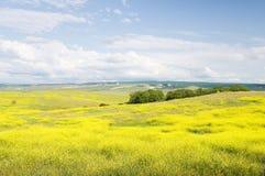 Blühende Felder des Sommers Lizenzfreies Stockbild