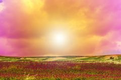 Blühende Felder von Sizilien Lizenzfreies Stockbild