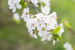 Blühende Gärten Stockfotos