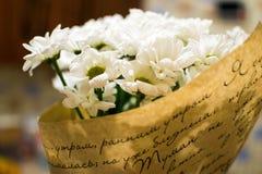 Blühende Gartengänseblümchen, die schönsten Blumen lizenzfreie stockfotografie