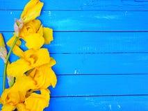 Blühende gelbe Iris auf einem blauen hölzernen Hintergrund Stockfotos