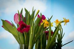 Blühende gelbe Iris und rote Tulpen vor dem hintergrund des Frühlingshimmels Stockbild