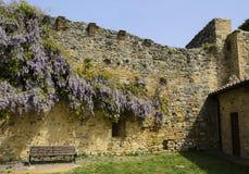 Blühende Glyzinie in San Gimignano, Italien Stockbild