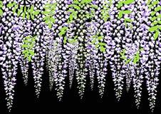Blühende Glyzinie verzweigen sich mit Blättern, Vektorillustration Lizenzfreies Stockfoto