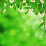 Blühende Grünblätter und -blumen Lizenzfreie Stockbilder