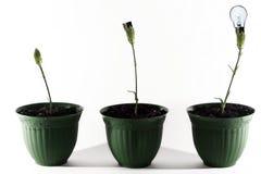 Blühende Ideen Lizenzfreie Stockfotos