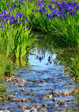 Blühende Iris im japanischen Garten, Kyoto Japan Stockfotografie