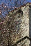 Blühende Kirschblüte auf einem Hintergrund des mediaval Fensters und des blauen Himmels im Frühjahr, Stockfotografie