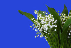 Blühende Lilien des Tales Lizenzfreie Stockfotos