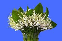 Blühende Lilien des Tales Lizenzfreies Stockfoto