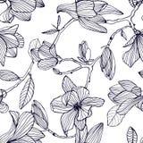 Blühende Magnolie Übergeben Sie gezogenes nahtloses Schwarzweiss-Muster mit blühenden Blumen Vektortapete vektor abbildung