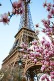 Blühende Magnolie vor dem hintergrund des Eiffelturms Stockbilder