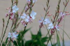 Blühende nette Blumen im Garten Lizenzfreie Stockfotos