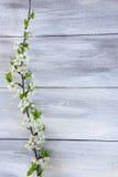Blühende Niederlassung des Frühlinges stockbild