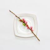 Blühende Niederlassung des Pfirsiches mit rosa Blumen auf einer weißen Untertasse auf weißem Hintergrund Lizenzfreie Stockfotografie