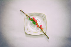 Blühende Niederlassung eines Pfirsiches mit rosa Blumen auf einer weißen Untertasse auf einer grauen Hintergrundnahaufnahme, Drau Stockbild