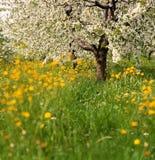 Blühende Obstbäume in der Wiese Lizenzfreie Stockfotos