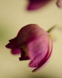 Blühende Orchidee stockbild