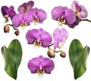 Blühende Orchidee mit Tautropfen collage Getrennt Stockfotografie