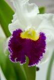 Blühende Orchideen Stockfotografie