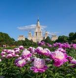 Blühende Pfingstrosenblumen im sonnigen Campus von Moskau-Universität lizenzfreies stockbild