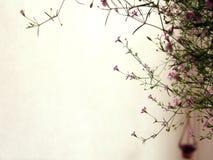 Blühende Pflanze auf Balkon Lizenzfreies Stockfoto