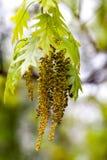 Blühende Pflanzen des Frühlinges Lizenzfreie Stockfotografie