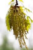 Blühende Pflanzen des Frühlinges Stockfoto
